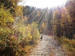 Black Hills Autumn & Dakota