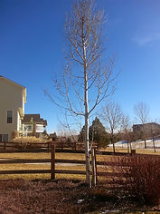 Dead tree removal cost