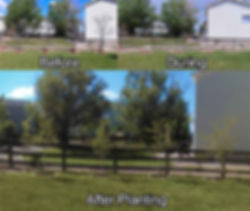 Removal and planting of trees before and after