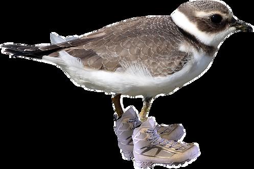 plover rovers logo bird.png