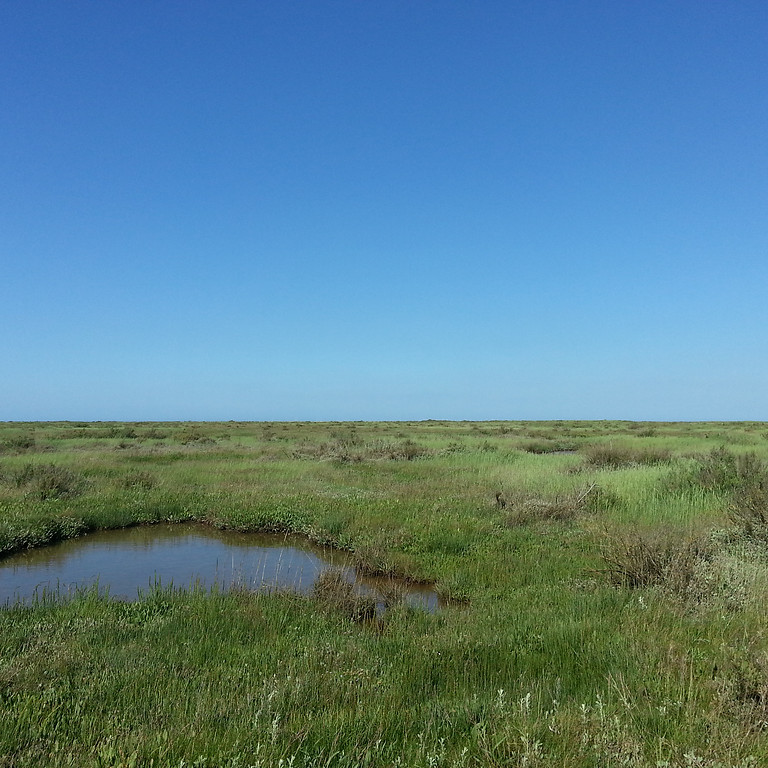 Getting to know our local salt marsh