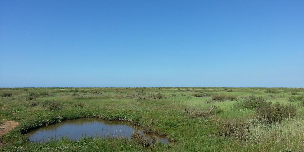 Salt Marsh Day at Portbury
