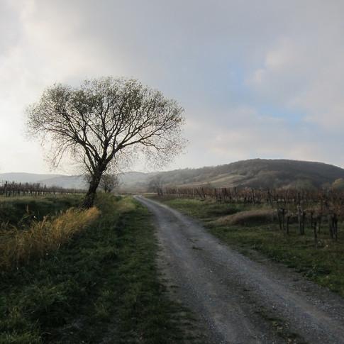 2013 Neusiedlersee