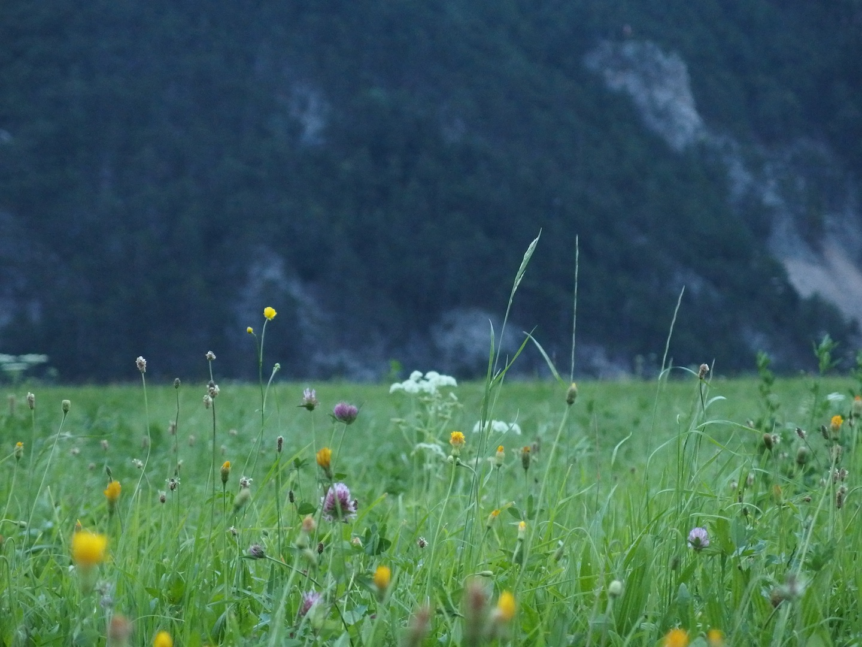 01Schneeberg, Austria