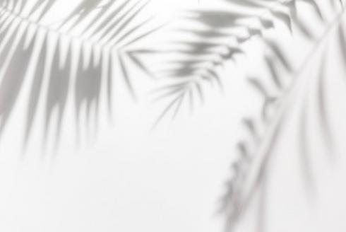 tropical tree shadow2