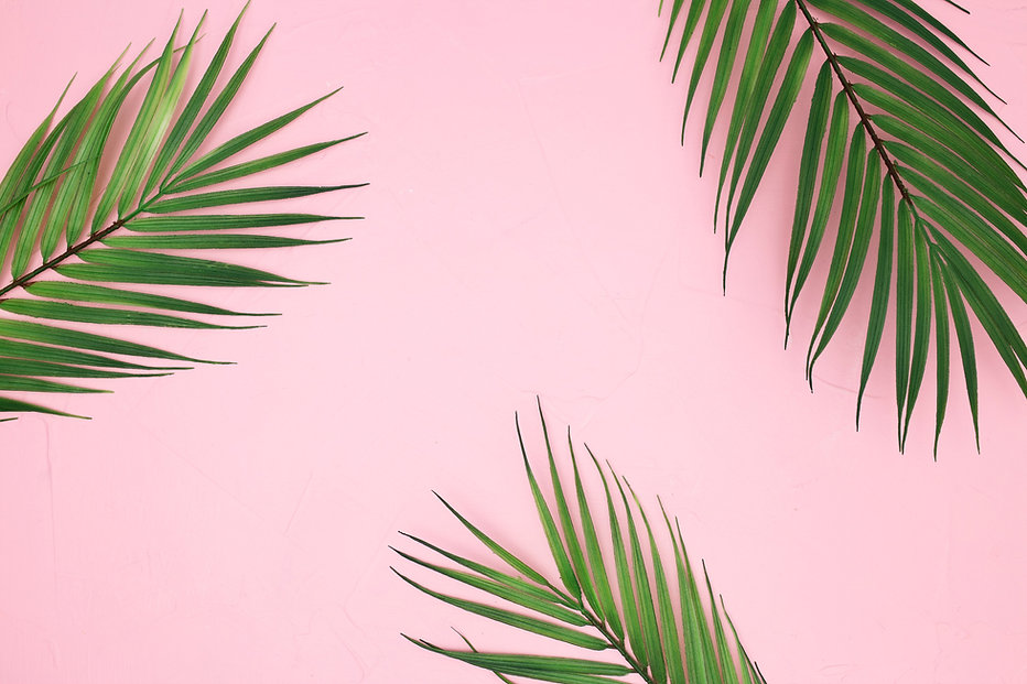 summer-palm-leaves-pink-background_edite