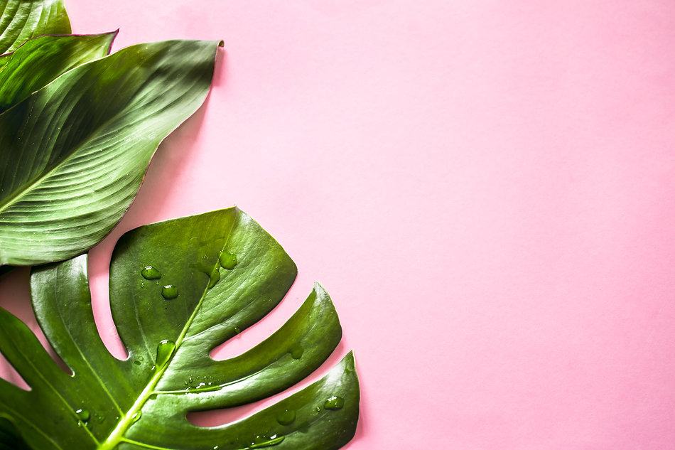 tropical-leaves-colored-background (1).j