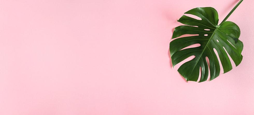 single-monstera-leaf-wide-empty-pastel-p