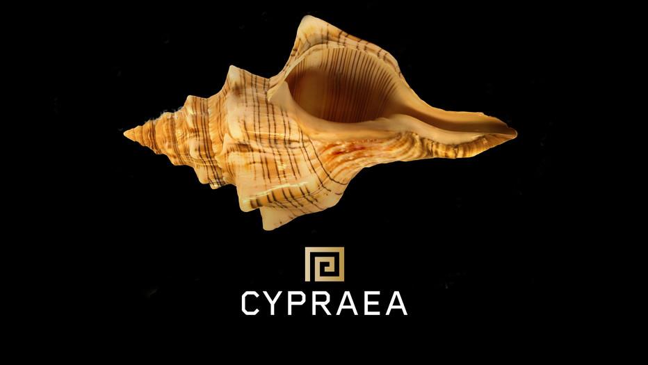 Cypraea
