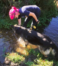 Big bad wolf dog behaviour