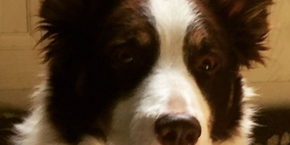 Understanding Your Rescue Dog