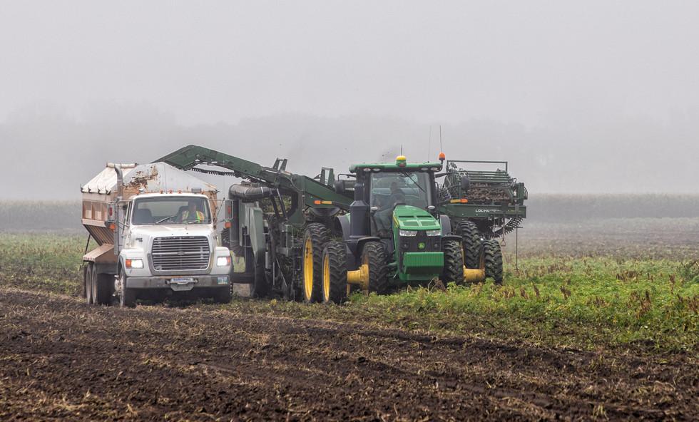 Morning Fog Potato Harvest