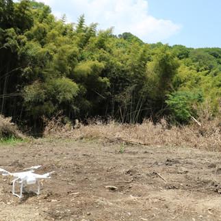 世羅町にて竹林の調査をしました!