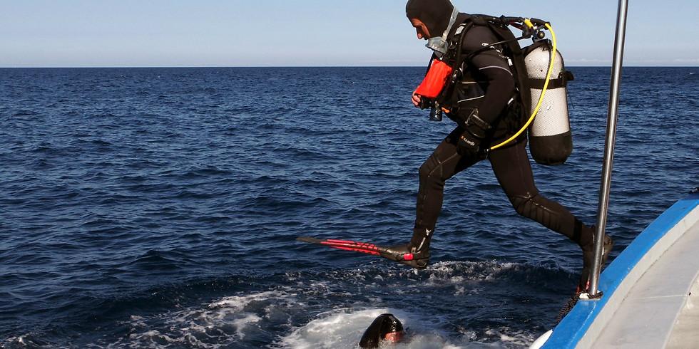 Estartit 2017 - Plongées aux îles Mèdes en Espagne