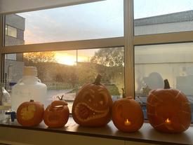 Autumnal Lab Decorations !