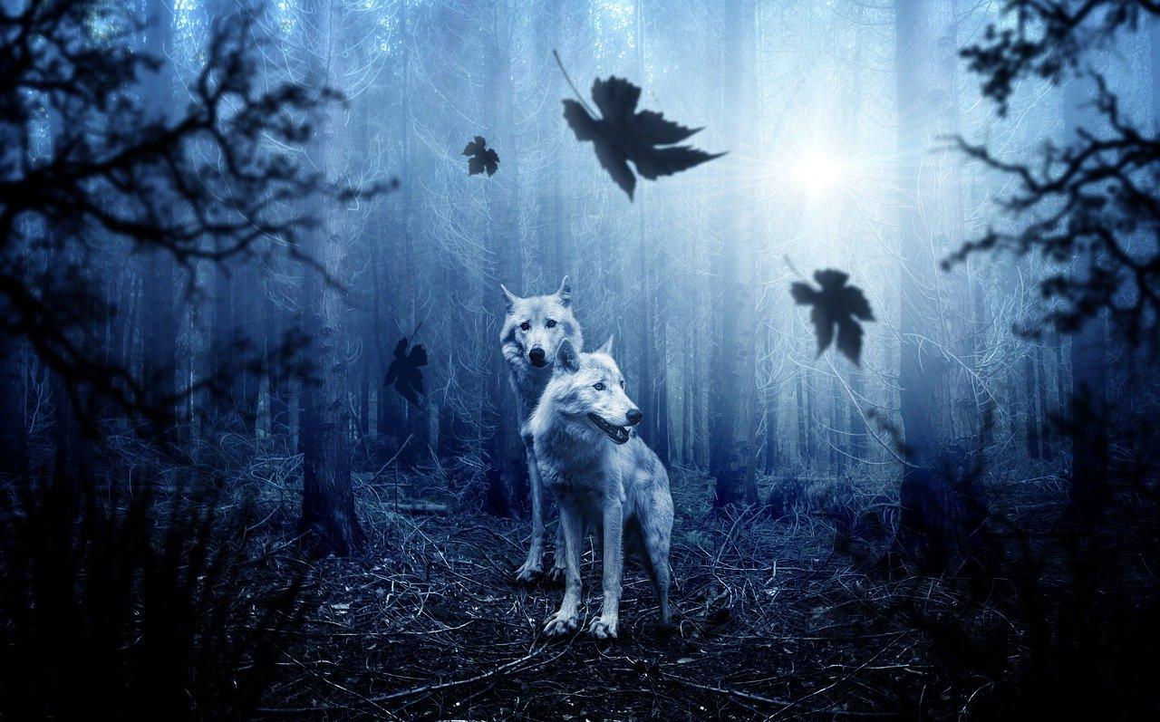 wolf-2864647_1280.jpg