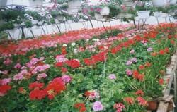 serre-florale-albert-monique-aiguillon