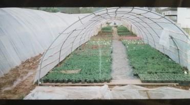 serre-albert-fleurs-massif-rosiers-arbustes-aiguillon