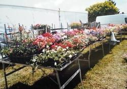albert-gerard-fleurs-massif-aiguillon