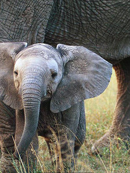 Africa - Kruger National Park.jpg
