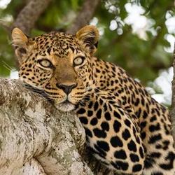 Kruger National Park - Africa