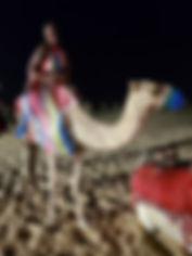 dubai camel.jpg