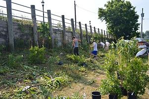 slope planting.png