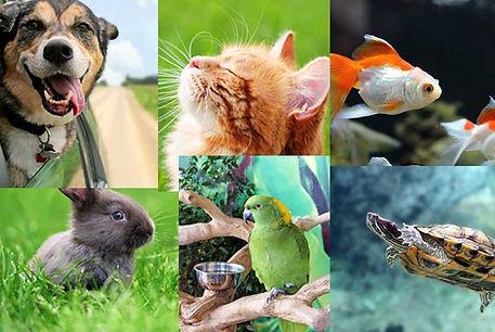 Online shopping centre Australia Pet House pet food and pet accessories