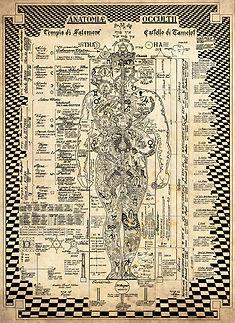 anatomiagiusta.jpg