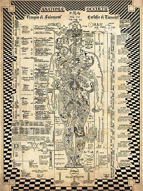 ANATOMIA OCCULTA - Poster