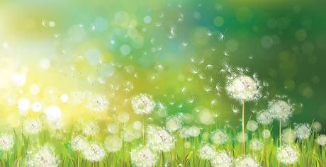 spring.jpg