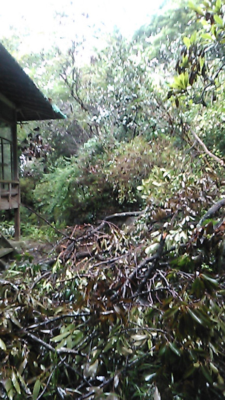 Typhoon 21 damaged my parents' house