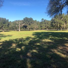 Kingsfield Farm Ocala