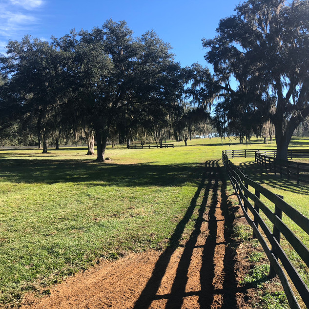 huge field with a hill for conditioning Kingsfield Farm Ocala