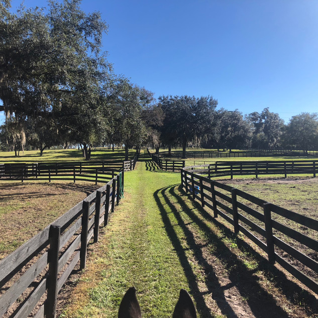 Ample turnout Kingsfield Farm Ocala