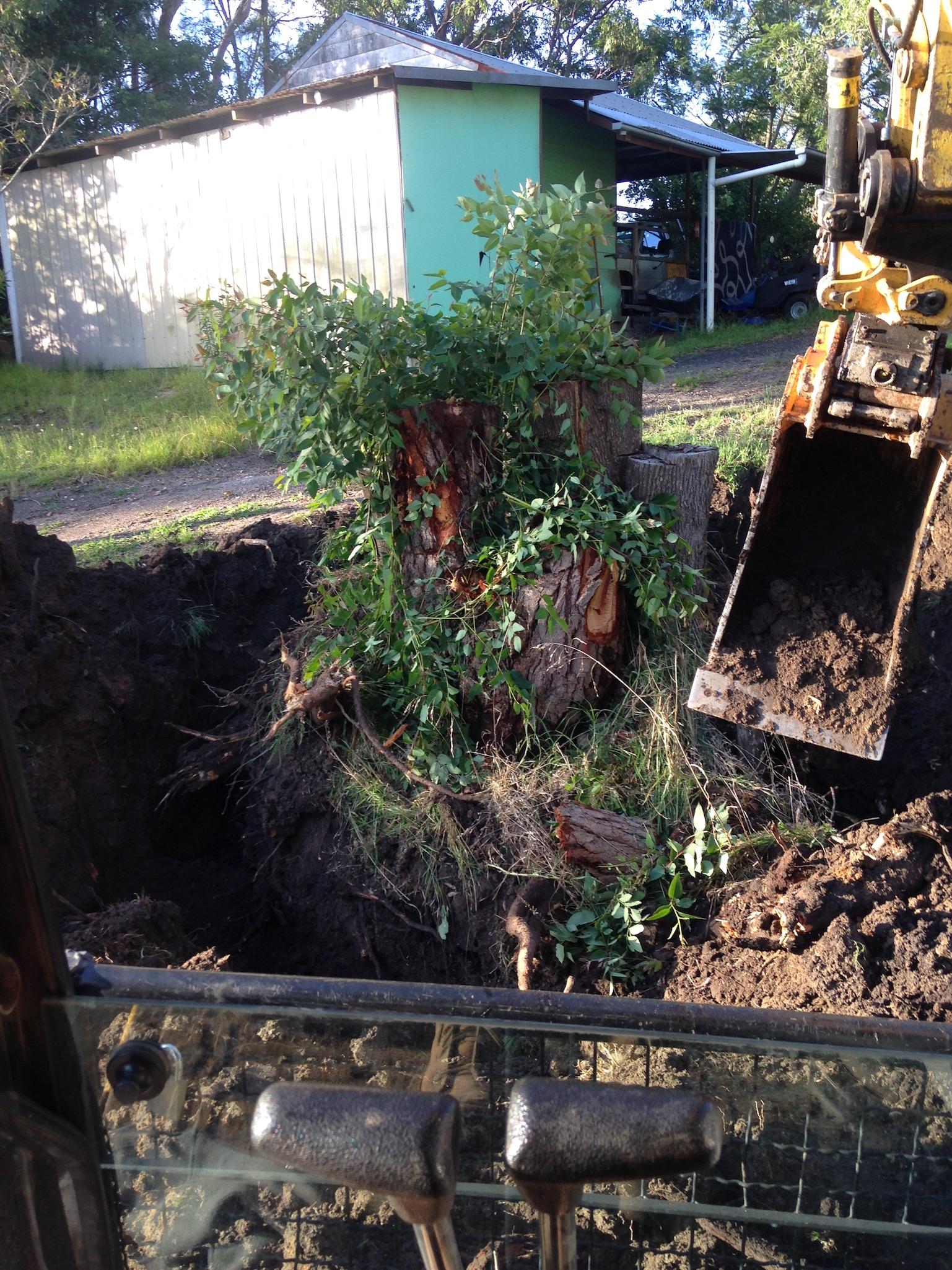 Tree Removal 01.jpg