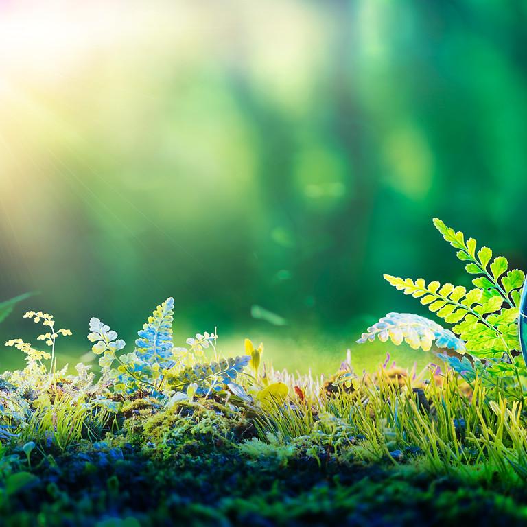 Webinaire Bloom - Etre un facilitateur d'intelligence collective écologique