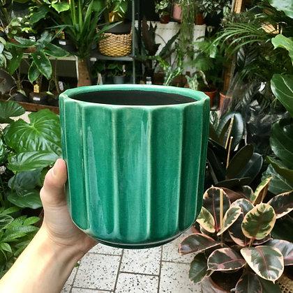 Green D13,5