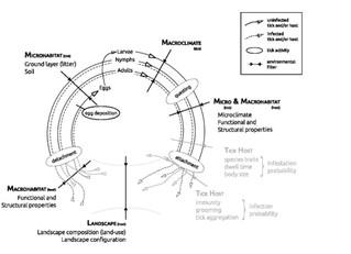 Habitat properties are key drivers of Borrelia burgdorferi (s.l.) prevalence in Ixodes ricinus popul