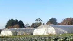 Agriculture biologique : les microfermes peuvent tirer leur épingle du jeu