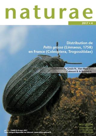 Distribution de Peltis grossa  (Linnaeus, 1758)  en France (Coleoptera, Trogossitidae)