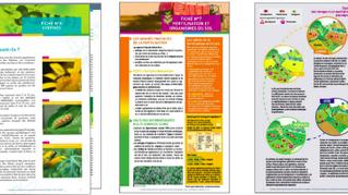 Connaître la biodiversité utile à l'agriculture pour raisonner ses pratiques agricoles
