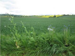 Les petites parcelles agricoles favorisent les pollinisateurs et le succès reproducteur des plantes