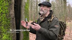 Sage usage de nos forêts: l'approche intégrative