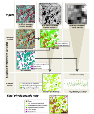 A generic remote sensing approach to derive operational essential biodiversity variables (EBVs) for