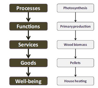 Forest biodiversity, ecosystem functioning and the provision of ecosystem services