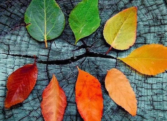 Autumn Equinox Reverse Adoption (Dark Arts)