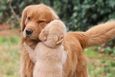 Ovaccinerad valp & hundträffar