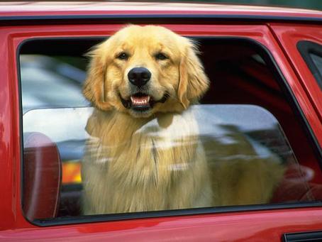 Att åka bil med din hund