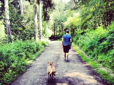 Bästa promenadstråken för hundar och människor i Sthlm